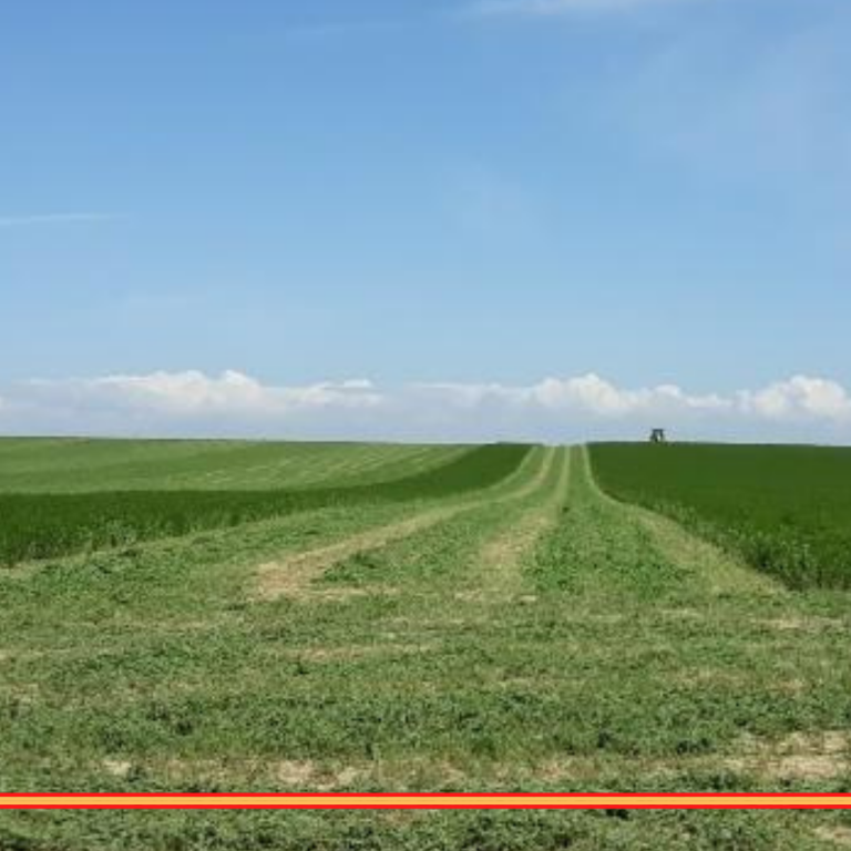 La alfalfa deshidratada se vuelca hacia el mercado español